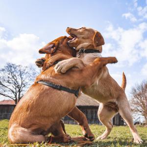 Welpen in der Hundeschule Braun-Klabes