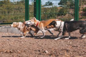Im Braun-Klabes Hundehotel kann Ihr Hund mit Kollegen ausgiebig spielen