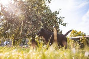 Mit dem Birnenbaum in Auslauf 1 finden die Hunde im Sommer einen klasse Schattenspender