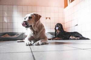 Unsere Boxen können wir flexibel mit Gruppen, mit zwei oper einem Hund belegen.
