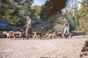 Spaziergänge gehören im Hundehotel und in der Hundetagesstätte zum Programm