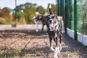 Happy Dog, happy Mums and Dads. Dass Hunde auch Grinsen können, sieht man hier prima, oder?